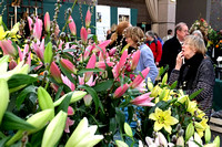 21/02/2014 : London. Fresh winter colour and early-flowering plants exhibited at the first RHS show of the year. The RHS London Plant and Design Show is open on Friday 21 and Saturday 22 February.