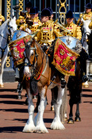Household Cavalry (HCav) Shire Drum Horse